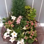 Coupe de plante deuil