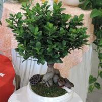 Mes conseils fleurs plantes items fan de fleurs for Petites plantes vertes